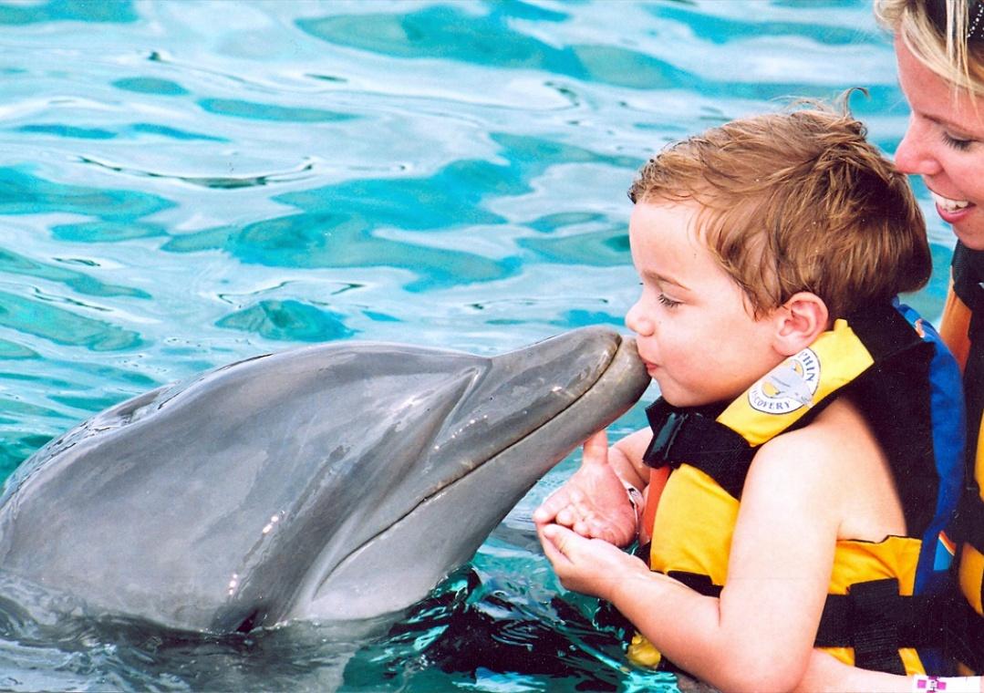 Центр дельфинотерапии открылся в Ялте