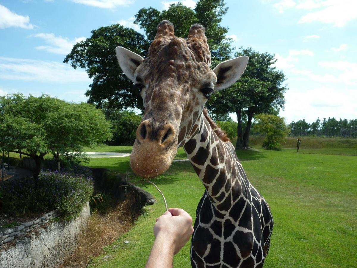 Зоопарк Майами отличное место для общения с диковиными животными.jpg