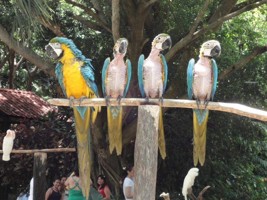 Отправившись в парк Манати, вы сможете увидеть более 500 редких экзотических животных, всевозможных тропических птиц и рептилий