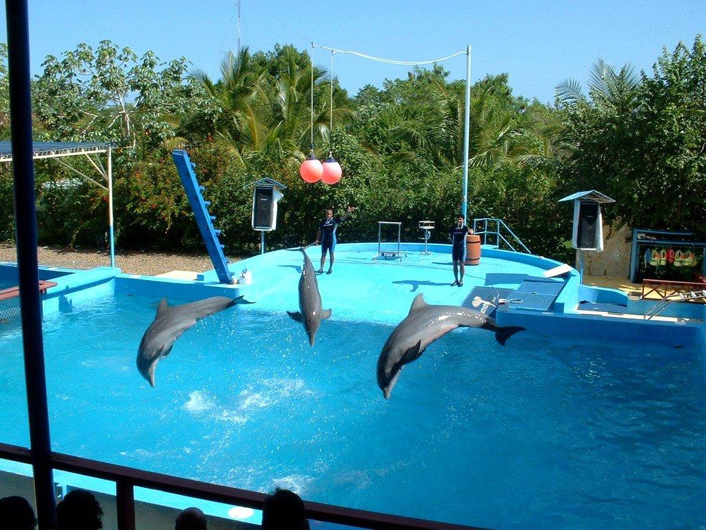 В парке Манати большой популярностью пользуются представления дельфинов