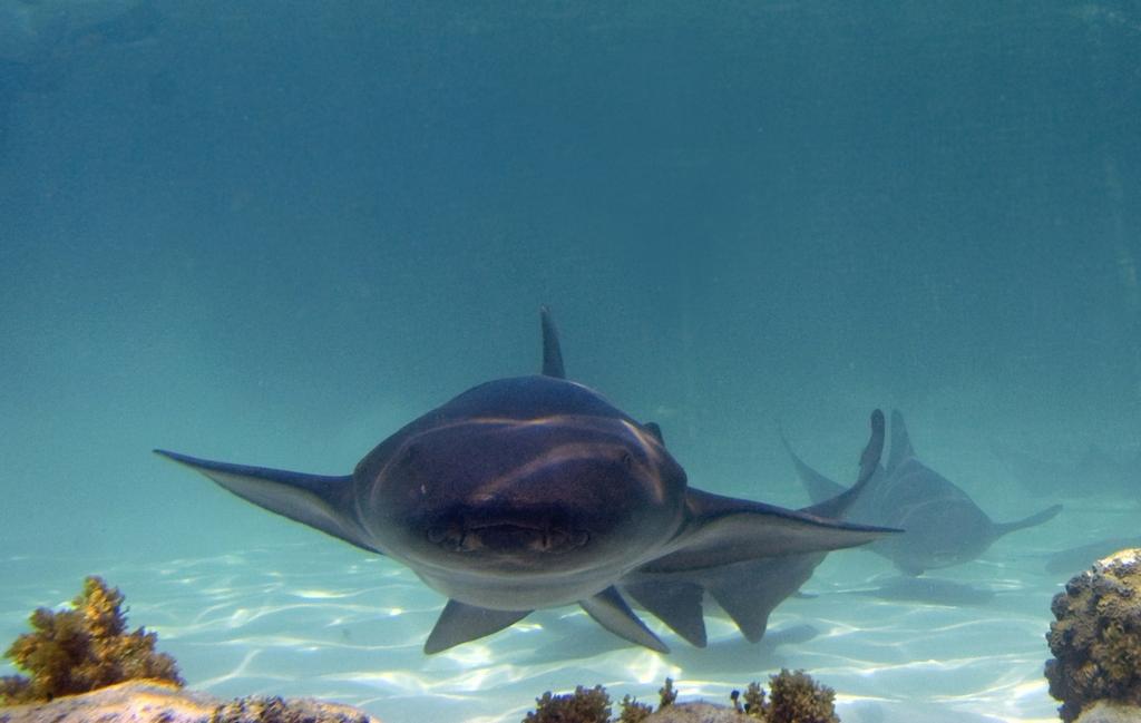 Но не удивляйтесь если в нескольких сантиметрах от вас проплывет настоящая акула